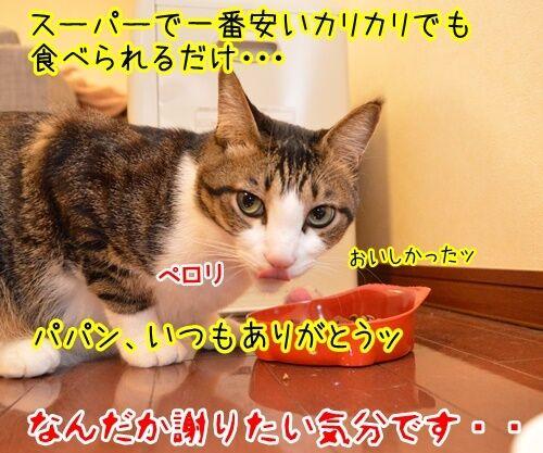 感謝のキモチ 猫の写真で4コマ漫画 4コマ目ッ