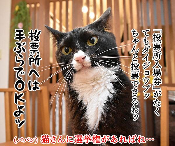 期日前投票に行ってちょーだいッ 猫の写真で4コマ漫画 3コマ目ッ