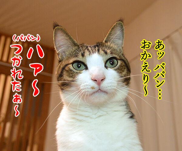 ただいまぁ 其の四 猫の写真で4コマ漫画 1コマ目ッ