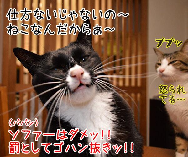 うっかりさん 猫の写真で4コマ漫画 2コマ目ッ