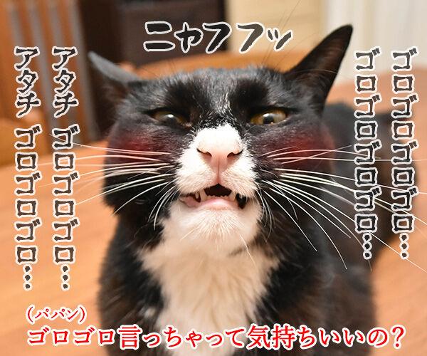 こちょこちょ ゴロゴロ 猫の写真で4コマ漫画 3コマ目ッ