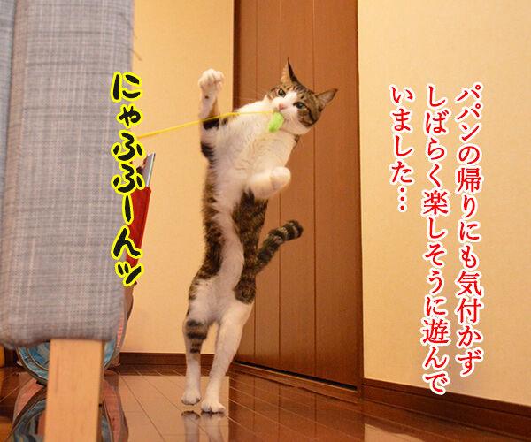 じゃらしのはなし 猫の写真で4コマ漫画 2コマ目ッ
