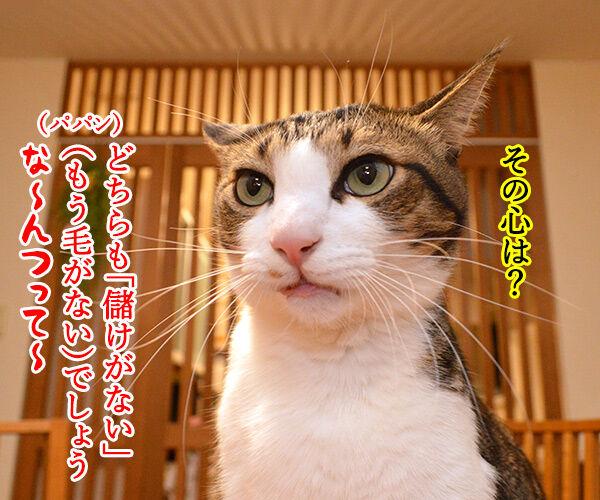 ネコノミクスの経済効果は2兆円超 猫の写真で4コマ漫画 3コマ目ッ