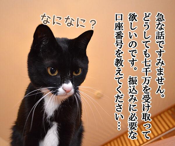 迷惑メール 猫の写真で4コマ漫画 2コマ目ッ