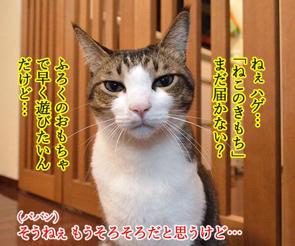 「ねこのきもち」まだぁ? 猫の写真で4コマ漫画 1コマ目ッ