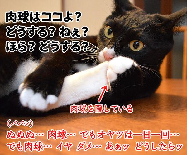 オヤツちょーだいッ 猫の写真で4コマ漫画 3コマ目ッ