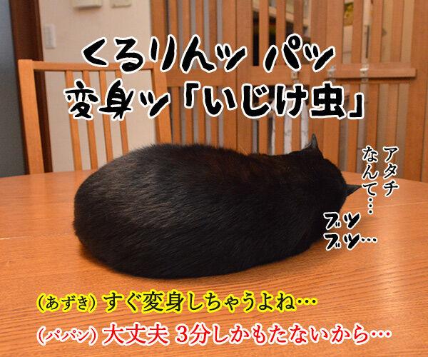 変身 猫の写真で4コマ漫画 4コマ目ッ