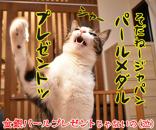 カーリング女子がメダル獲得なのッ 猫の写真で4コマ漫画 4コマ目ッ