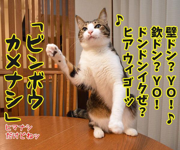 MCあずきのヒップホップ大喜利 猫の写真で4コマ漫画 2コマ目ッ