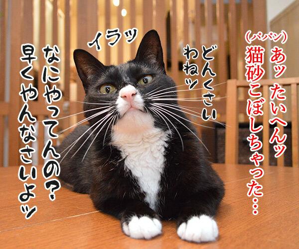パパンてホントに…… 猫の写真で4コマ漫画 2コマ目ッ