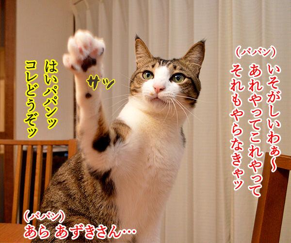 猫の手も借りたいと言うけれど… 猫の写真で4コマ漫画 1コマ目ッ