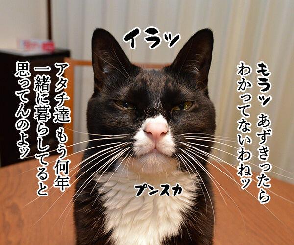 一緒に暮らしてもう何年? 猫の写真で4コマ漫画 1コマ目ッ