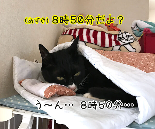 もう朝だよー 起きてー 猫の写真で4コマ漫画 3コマ目ッ