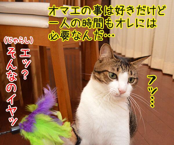 じゃらし的な彼女 猫の写真で4コマ漫画 3コマ目ッ