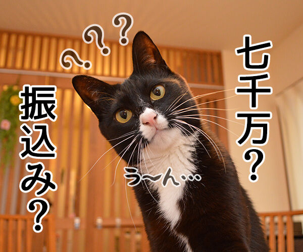 迷惑メール 猫の写真で4コマ漫画 3コマ目ッ