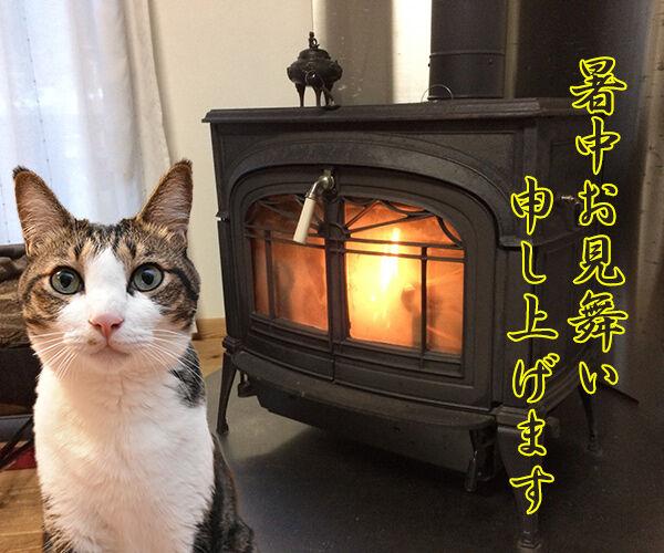 毎日暑いから 暑中お見舞い申し上げます 猫の写真で4コマ漫画 2コマ目ッ