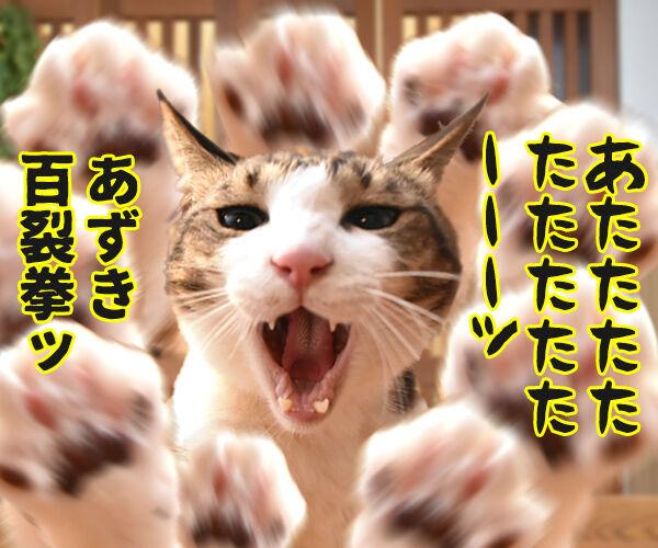 あずだいマートでお買い物 其の三 猫の写真で4コマ漫画 3コマ目ッ