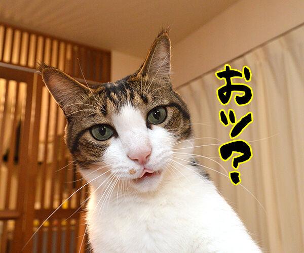 「秋分の日」でクイズですッ!! 猫の写真で4コマ漫画 2コマ目ッ