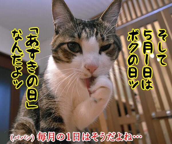 5月1日は何の日かしらッ? 猫の写真で4コマ漫画 2コマ目ッ