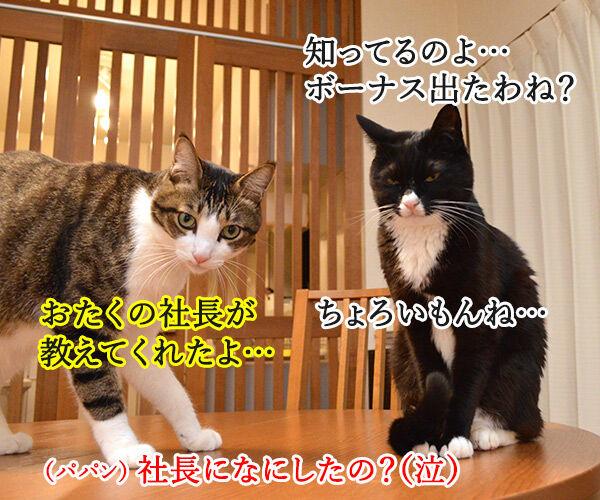 夏のボーナスキャンペーン開催中!! 猫の写真で4コマ漫画 1コマ目ッ