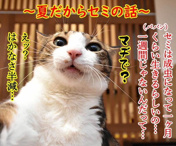 夏だから「セミ」の話 猫の写真で4コマ漫画 1コマ目ッ