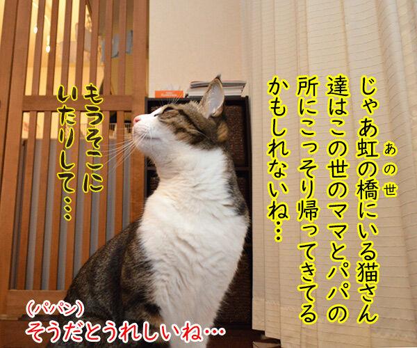 虹の橋から帰ってきてね 猫の写真で4コマ漫画 2コマ目ッ