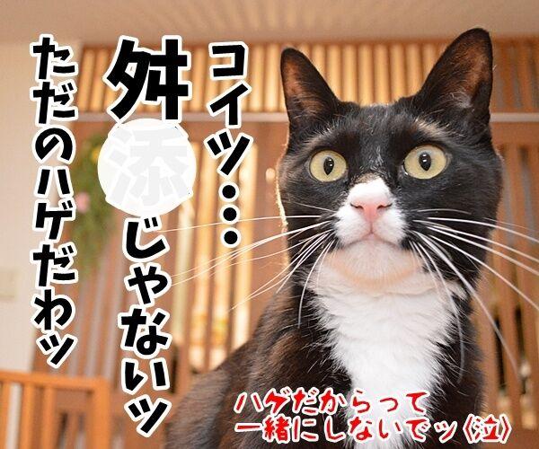 辞職ッ それッ 辞職ッ 猫の写真で4コマ漫画 4コマ目ッ