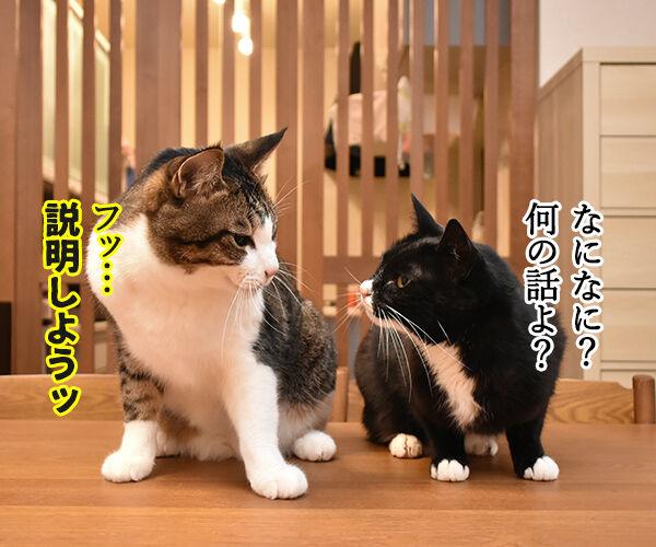 ラグビーワールドカップ日本代表がアイルランドに歴史的勝利なのッ 猫の写真で4コマ漫画 3コマ目ッ