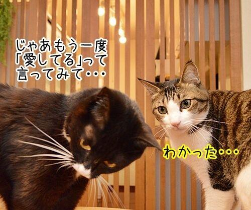 愛してるって言って 猫の写真で4コマ漫画 2コマ目ッ