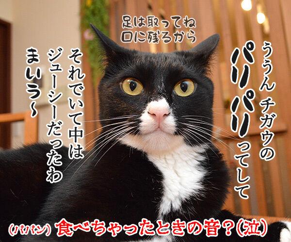 セミの声 猫の写真で4コマ漫画 4コマ目ッ
