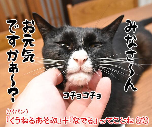 猫飼いさんが思う猫の毎日の生きがいランキングなのよッ 猫の写真で4コマ漫画 4コマ目ッ