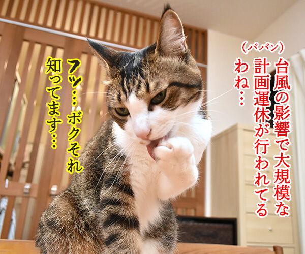 台風の影響で大規模な計画運休なのよッ 猫の写真で4コマ漫画 1コマ目ッ