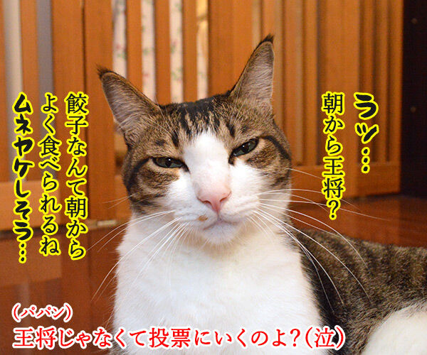 7月5日は投票に行くわよッ 猫の写真で4コマ漫画 2コマ目ッ