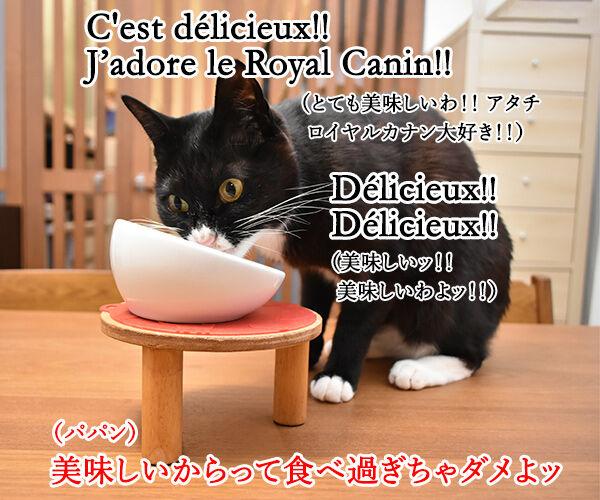 ロイヤルカナンは美味しいけど… 猫の写真で4コマ漫画 2コマ目ッ