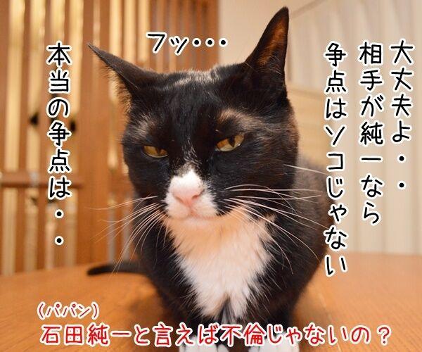 石田純一氏、東京都知事選に出馬? 猫の写真で4コマ漫画 3コマ目ッ