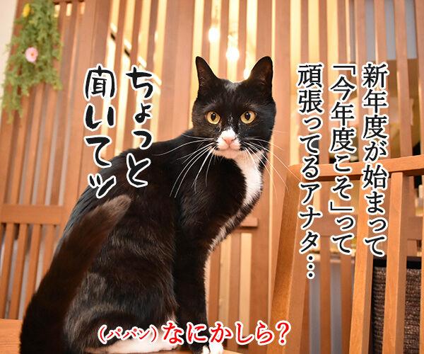 新年度だからって頑張りすぎちゃダメなのよッ 猫の写真で4コマ漫画 1コマ目ッ
