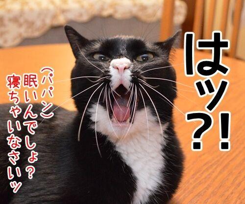 見届けなくちゃ 猫の写真で4コマ漫画 3コマ目ッ