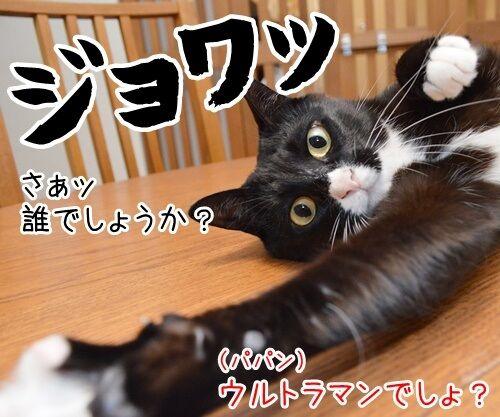 たいくつだからモノマネするわよッ 猫の写真で4コマ漫画 2コマ目ッ