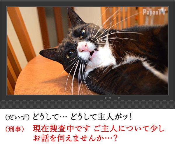 2時間ドラマの再放送 開始15分 猫の写真で4コマ漫画 2コマ目ッ