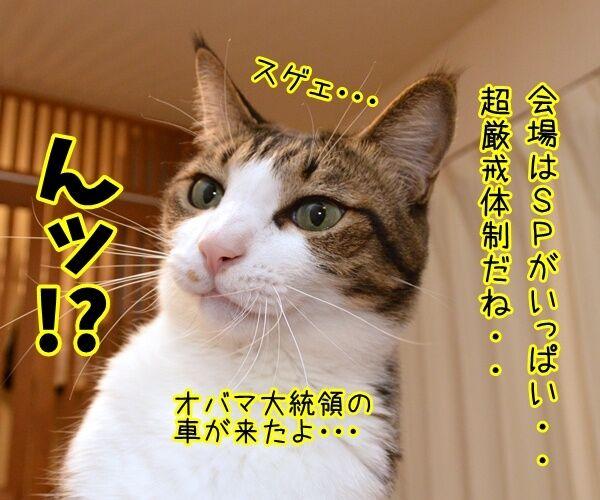 オバマ大統領が広島訪問ですってッ 猫の写真で4コマ漫画 2コマ目ッ
