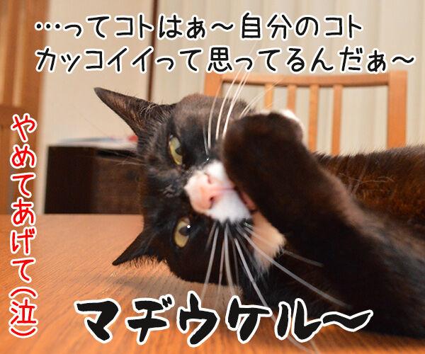 ねぇねぇ~ ねぇってばぁ~ 猫の写真で4コマ漫画 4コマ目ッ