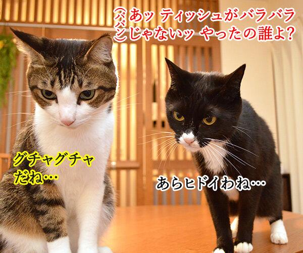 だれがやったのッ? 猫の写真で4コマ漫画 1コマ目ッ