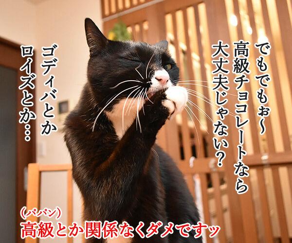 もうすぐバレンタインだから… 猫の写真で4コマ漫画 2コマ目ッ