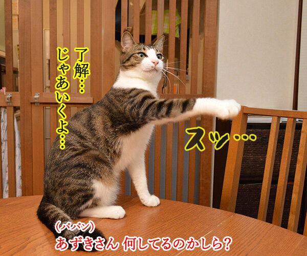 とりあえず 猫の写真で4コマ漫画 2コマ目ッ