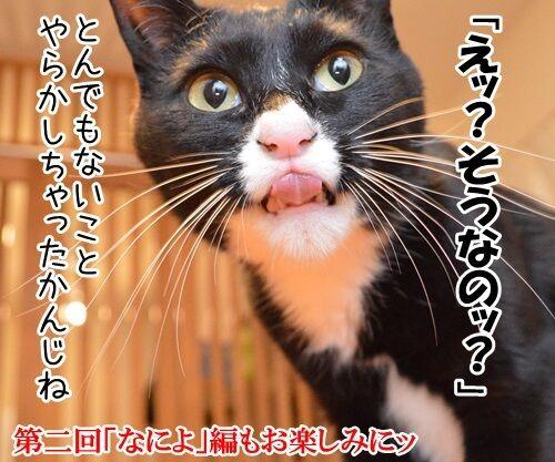 女優だいずの演技講座 猫の写真で4コマ漫画 4コマ目ッ