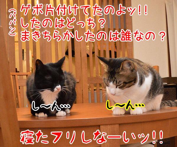 やってるね 猫の写真で4コマ漫画 4コマ目ッ