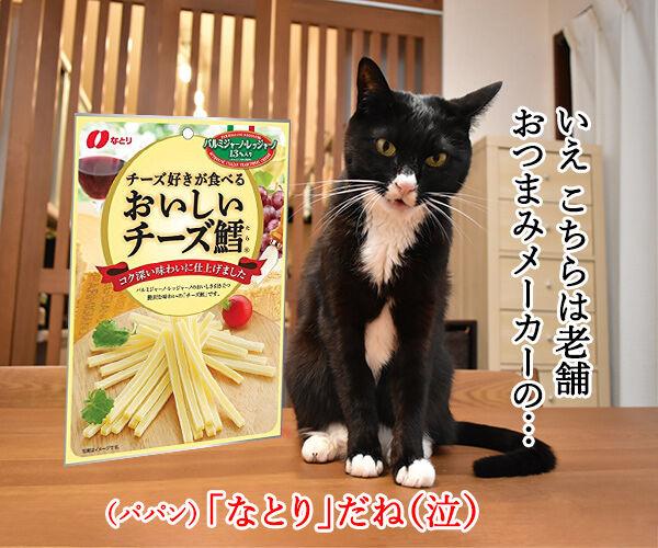 パパンちにマトリが家宅捜索なのッ 猫の写真で4コマ漫画 4コマ目ッ