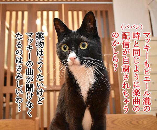 マッキーの曲が配信停止になるのはさみしいのよッ 猫の写真で4コマ漫画 1コマ目ッ