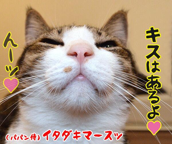 猫侍 其の四 猫の写真で4コマ漫画 4コマ目ッ