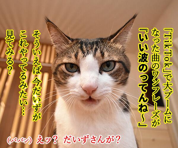ギャル流行語大賞2018 『いい波のってんね~』 猫の写真で4コマ漫画 3コマ目ッ